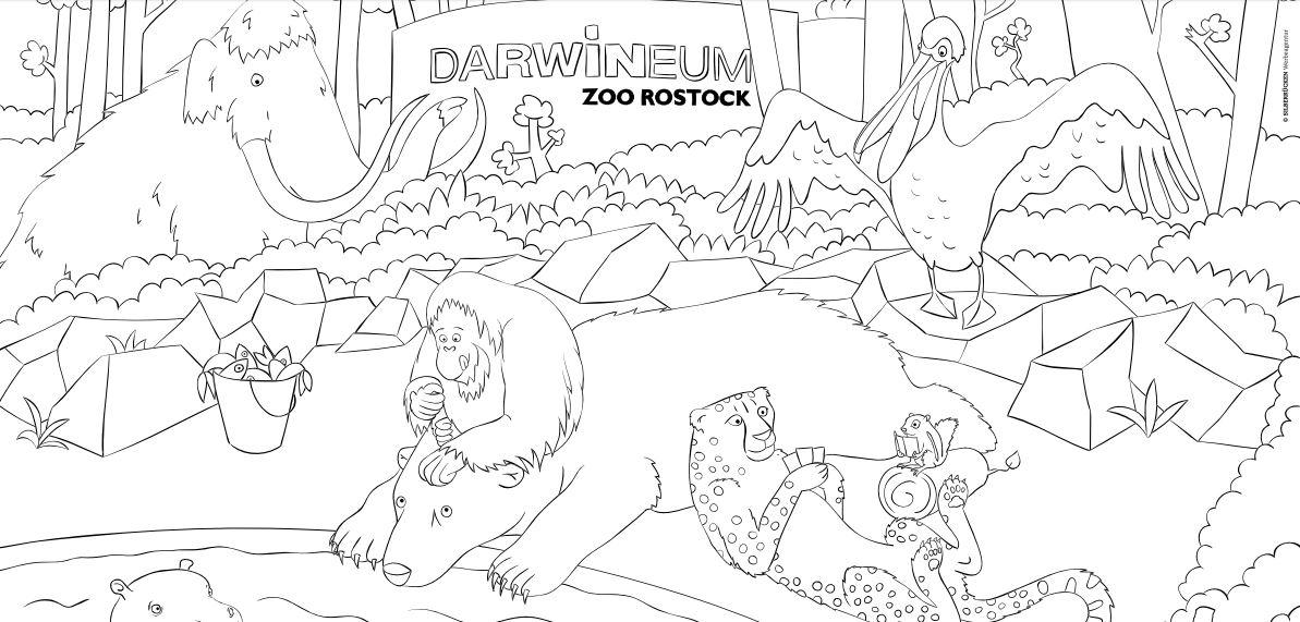 ausmalbilder zum ausdrucken zoo  viele zeichnungen zum